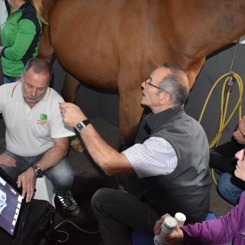 Pferde-Fortbildung mit Dr. Jean-Marie Denoix beim Ultraschall