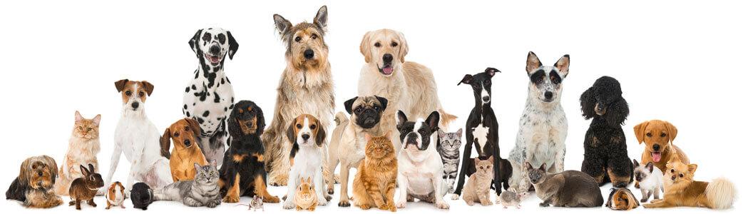 viele verschiedene Kleintiere wie Hund, Katze, Kaninchen, Hamster, Meerschweinchen, Maus
