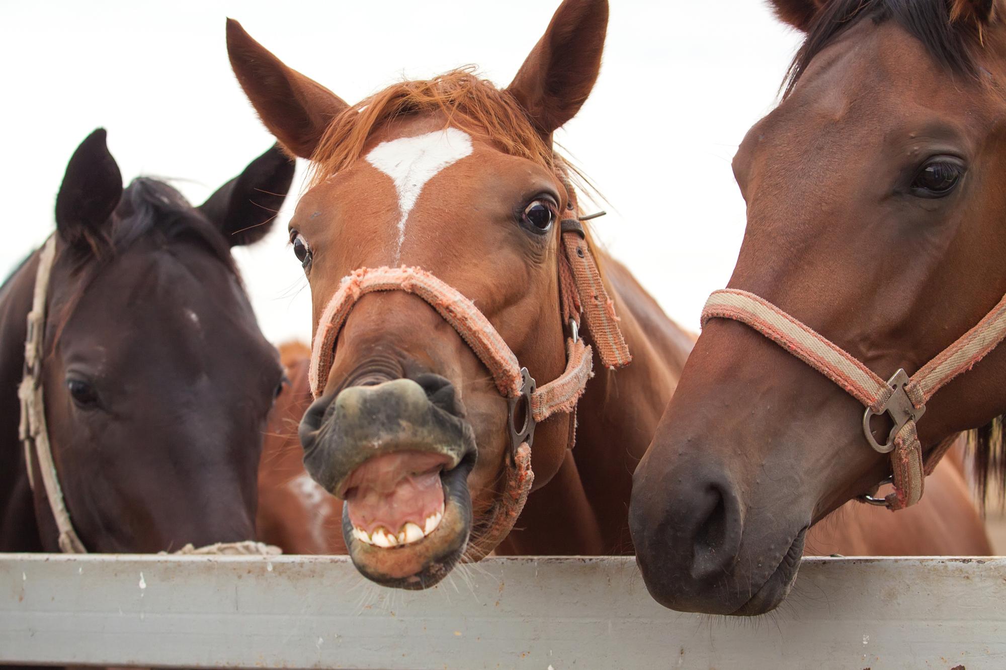Lachendes Pferd in der mobilen Praxis