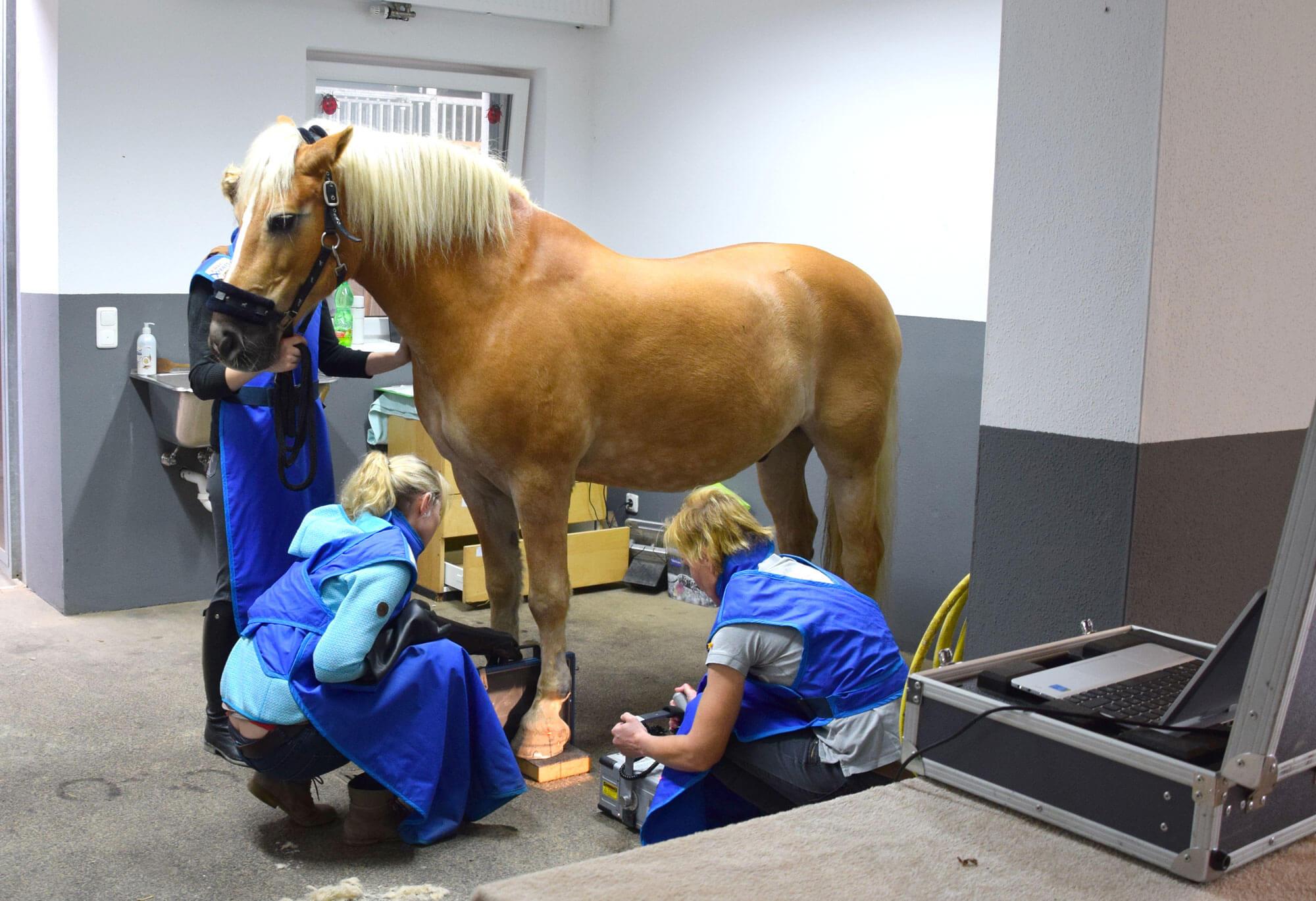 Tierärztin Dr. Sabine Täubel beim Röntgen eines Pferdes