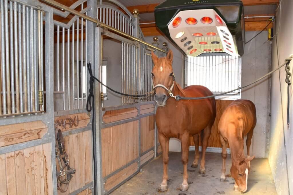 Mutterstute mit Fohlen in Pferdesolarium