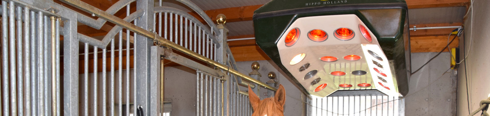Pferdesolarium – die Rotlichtlampen können Gutes bewirken
