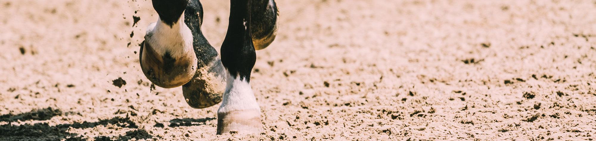 Warum stolpern Pferde?