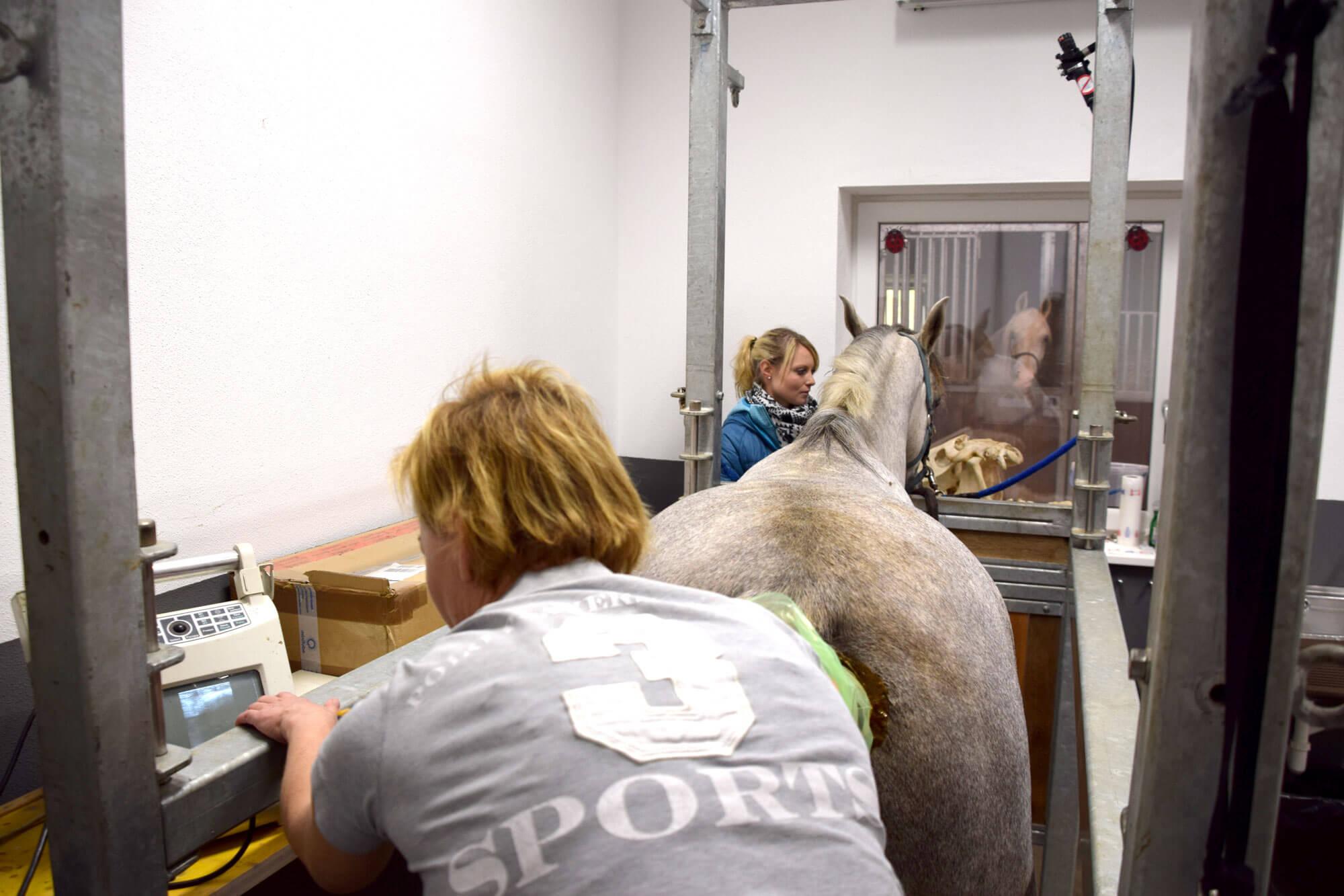 Tierärztin Dr. Sabine Täubel beim Ultraschall eines Pferdes